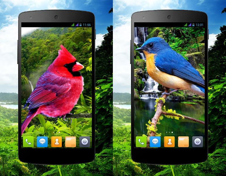 bird_phone_0.jpg.02fd8f0a3b02ba4c6a8b4ee9d296cc6a.jpg