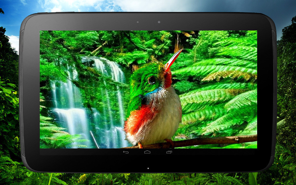 bird_tablet_1.jpg.4cf13ec1e78c99f25f47491b0c626641.jpg