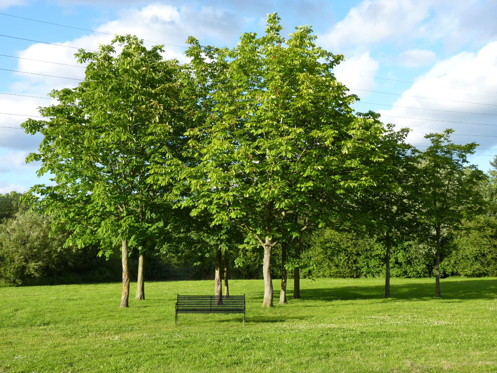 Winnersh_Meadows_Trees.jpg