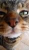 [ROM][Kitkat 4.4.4] CM11 -... - last post by sireur