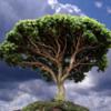 Baobob